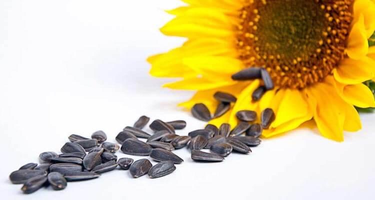 pestki słonecznika na odchudzanie